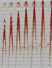 fig.1 - A common shot gather from a simultaneous source survey.  The interference appears coherent in this domain.